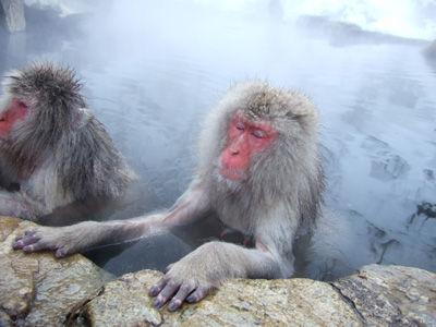 Snow-Monkey.jpg
