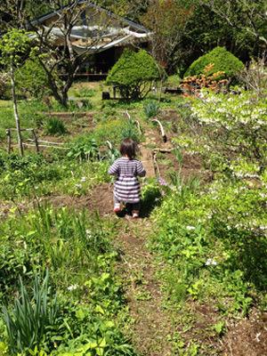 neko-garden.jpg