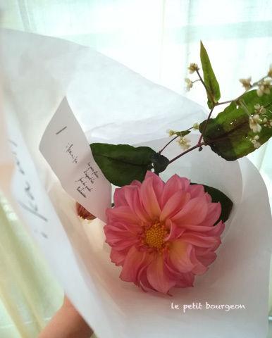 ikanikaflower1710.jpg