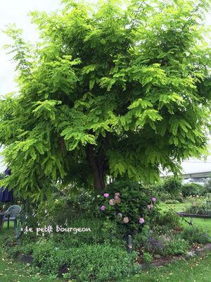 IMG_2757tree.jpg