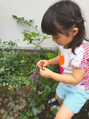 IMG_5209ブルーベリー収穫